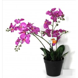Planta Orchid lila