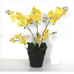 Planta Orchid amarillo