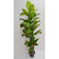 Arbol diefenbachia