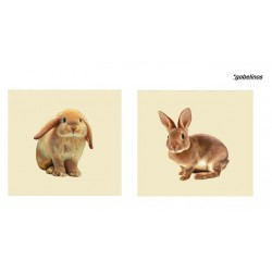 Set dos cojines Bunny