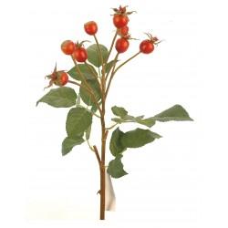 Flor fruto naranja
