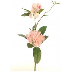 Rhododentdron rosa claro