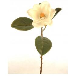 Yulan blanca